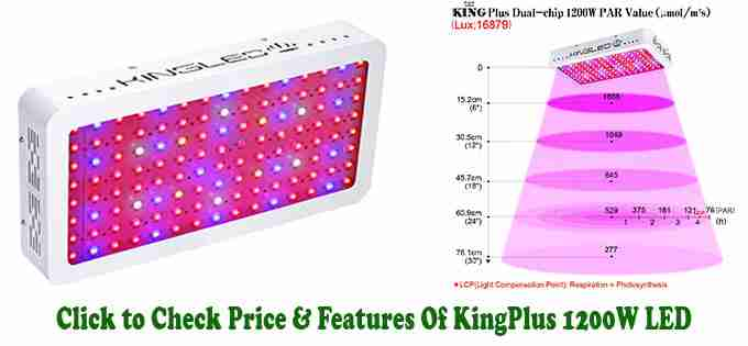 King Plus 1200W - Reviews of Best LED Grow Lights