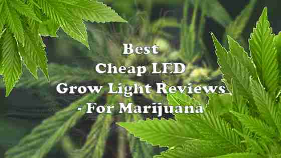 Reviews of Best Cheap LED Grow Lights That Work – Updated List of 2020