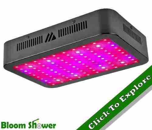 Dimgogo 1000W - 1000W LED Review In 2019