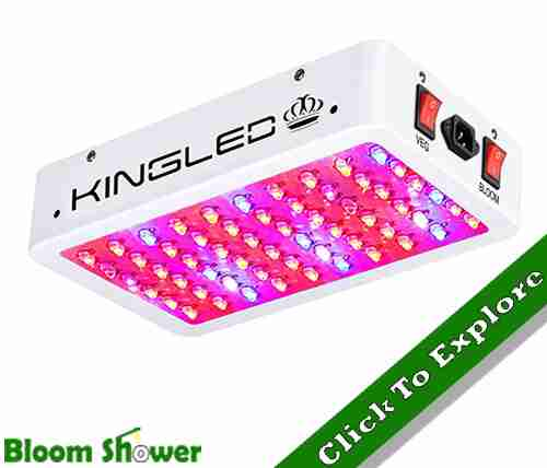 King Plus 600W Full Spectrum LED grow light for cannabis in 2020