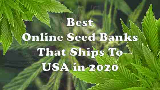 #10+ Best Online Seed Banks That Ship To USA – Curated Suppliers of 2020