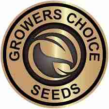 growers choice cannabis seed bank for fast shipping