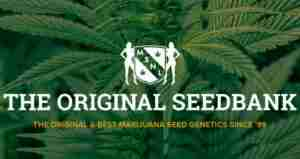 MSNL Seed bank - cannabis seed bank that ship to us