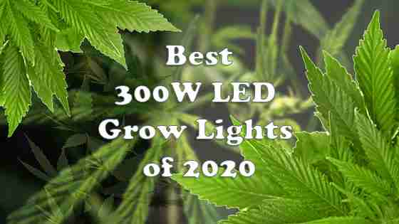 #7+ Best 300W LED Grow Lights for indoor Cannabis in 2020 – Reviews