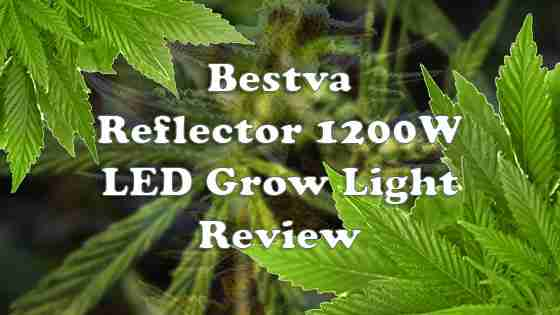 Bestva 1200W LED Grow Light Review – Is It Worth It in 2020?